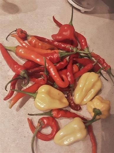 papriky.jpg