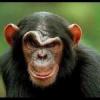 monkey78